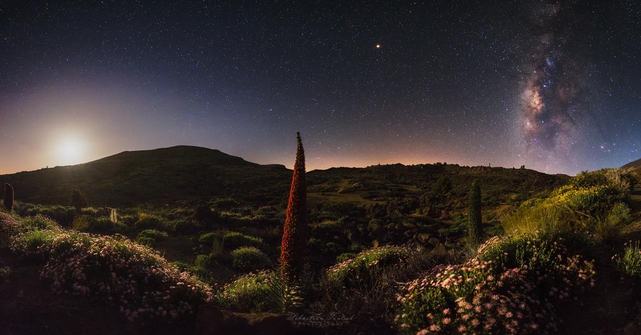 Tenerife Bugloss Moonrise by Sebastian Tontsch