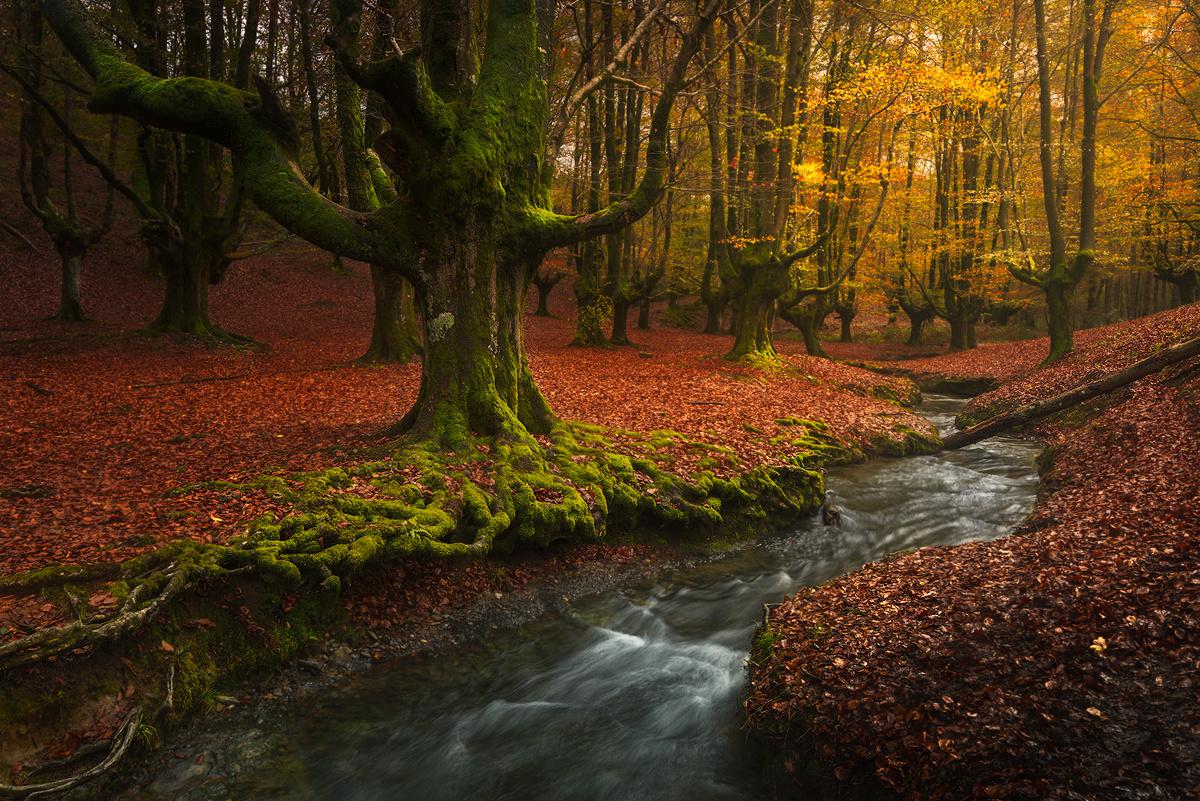 Otzarreta Forest by Grzegorz Piechowicz
