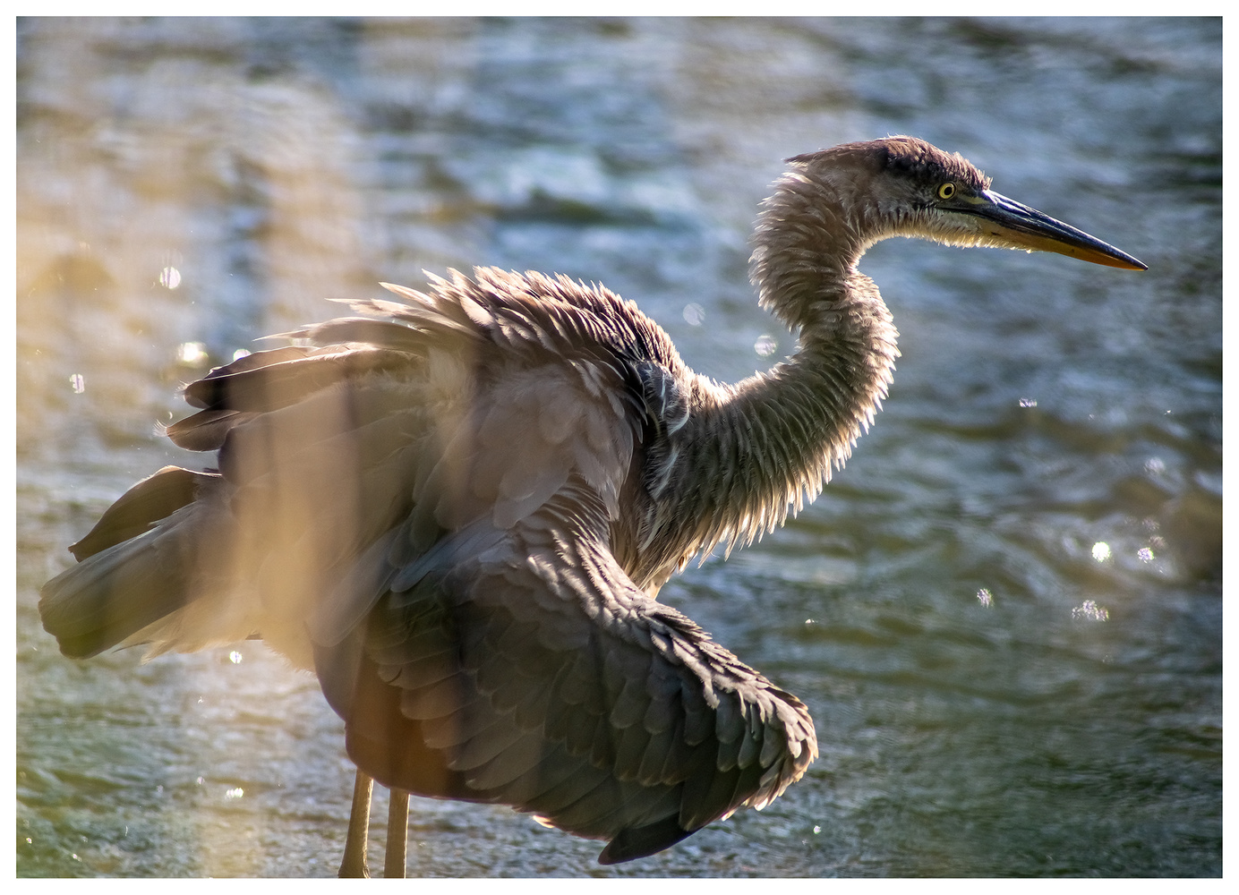 Ruffled Feathers by Danial McCoy