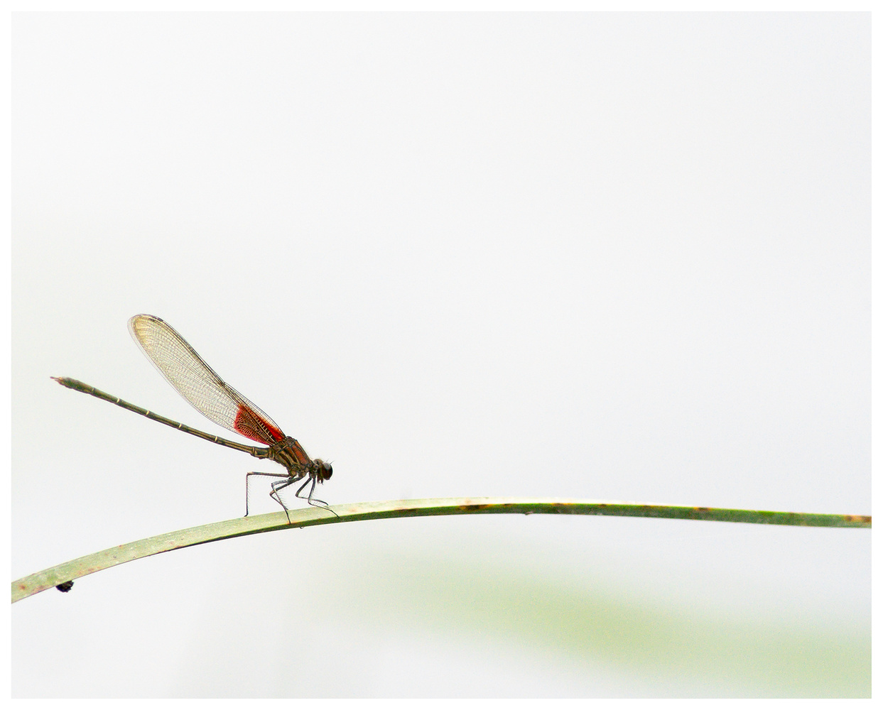 Dragonfly on grass by Danial McCoy
