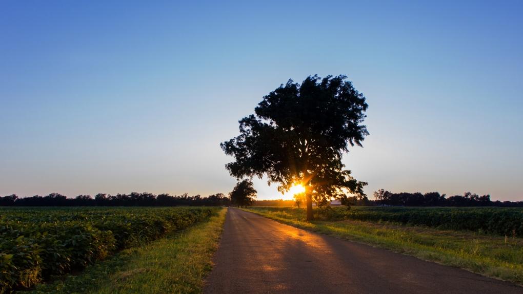 Sunset Tree by Stitch Jones