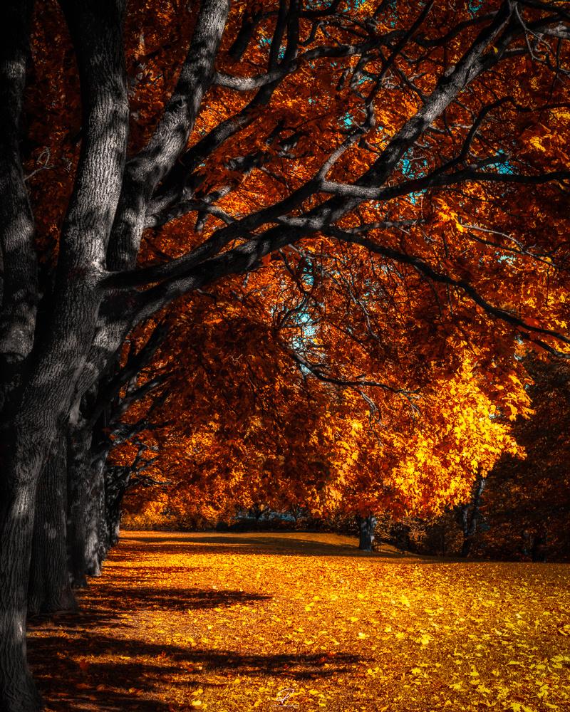 Autumn is here by Roger Hølmen