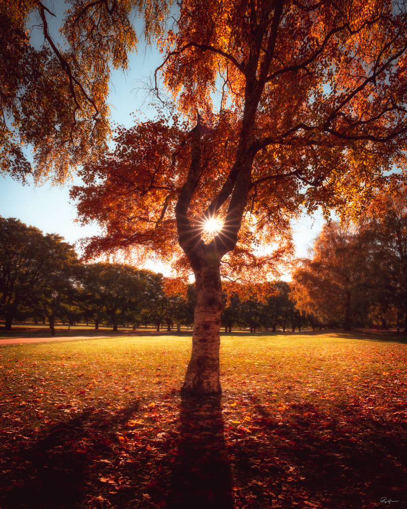 Sunset in the park by Roger Hølmen