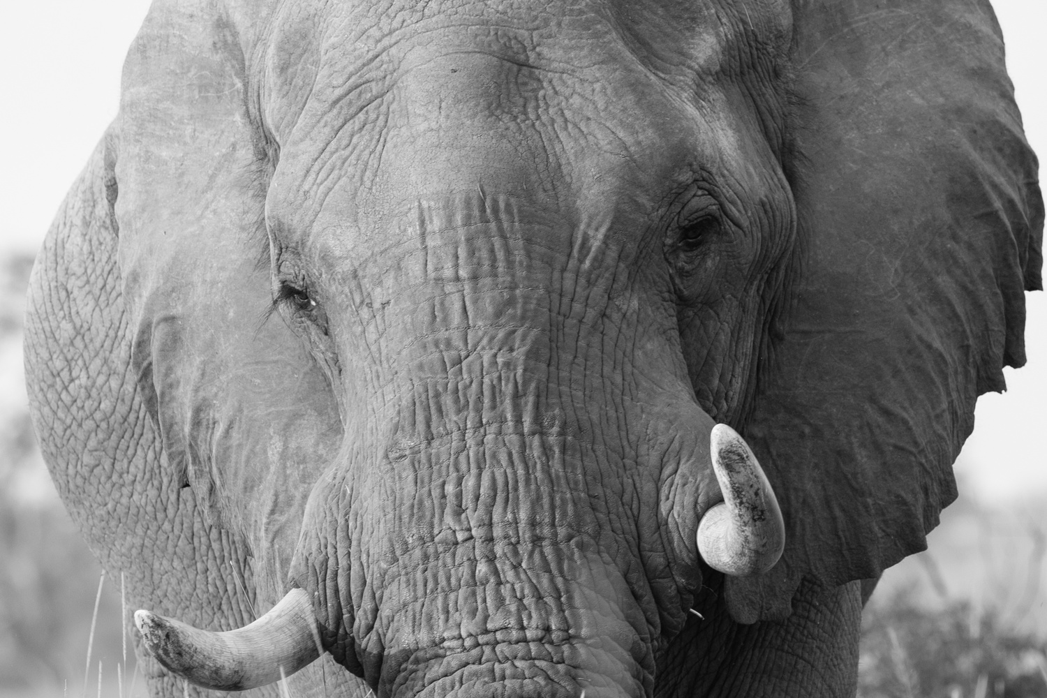 Eyes of the Elephant by Shawn Mahan