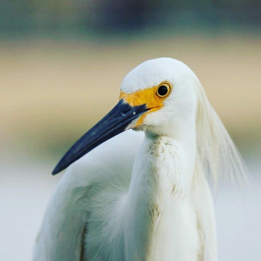 Florida wildlife  by Dustin Sutton
