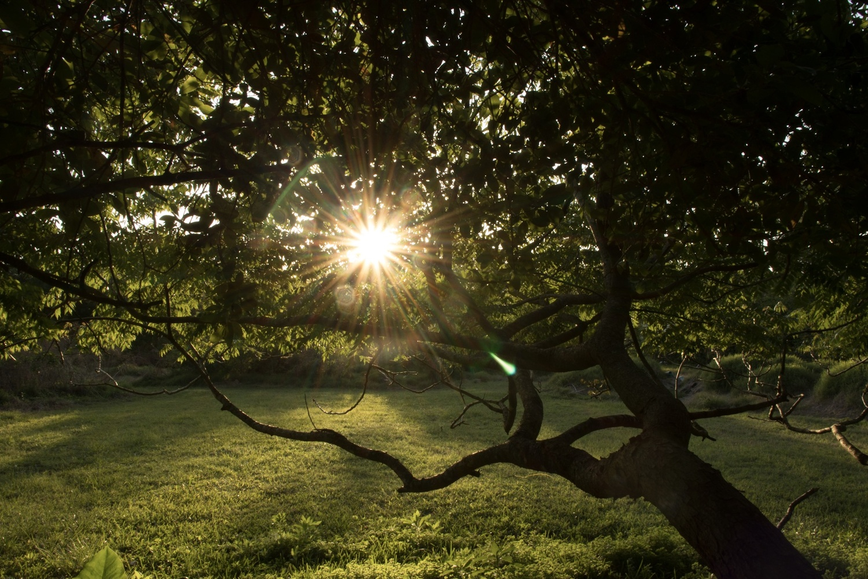 My tree by Dustin Sutton