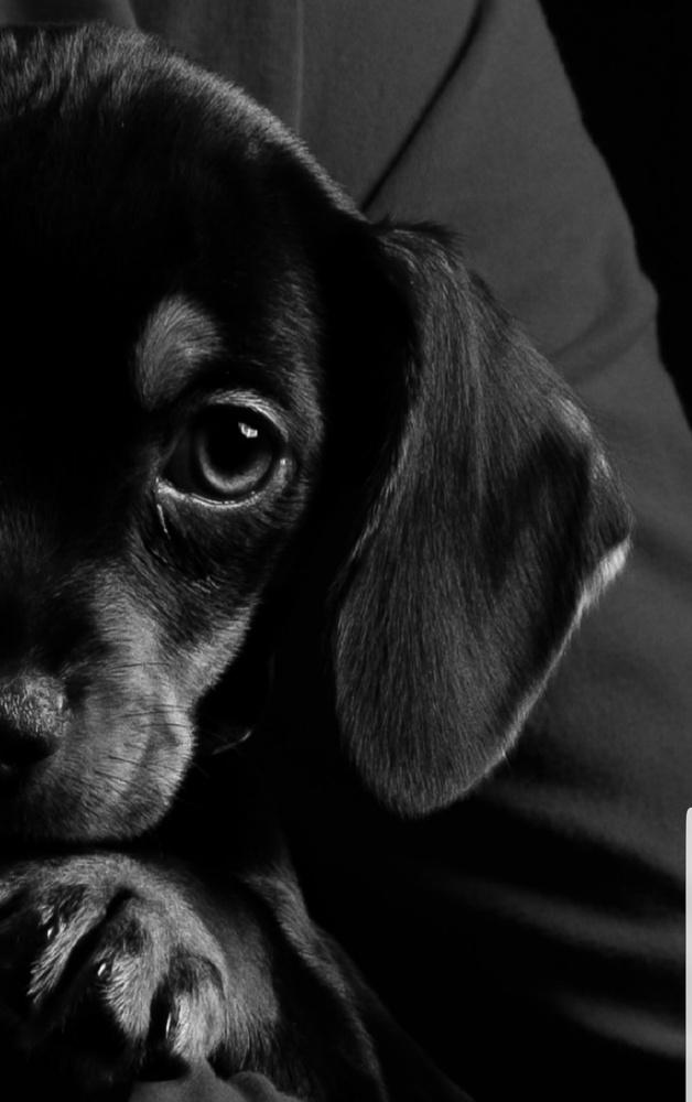 Little pup cookie by Ben kiff