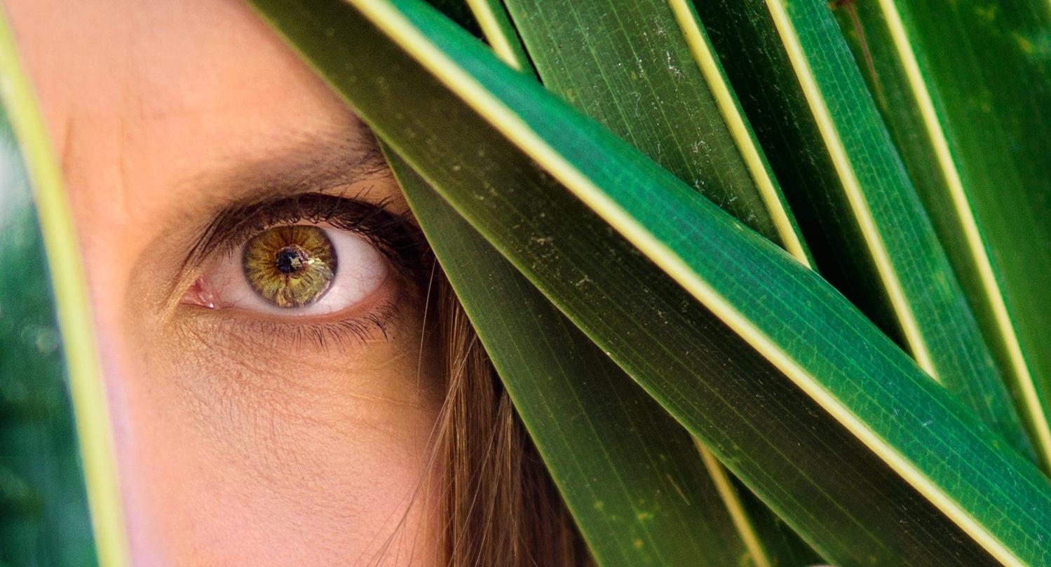in the palm leaves by krzysztof skubij