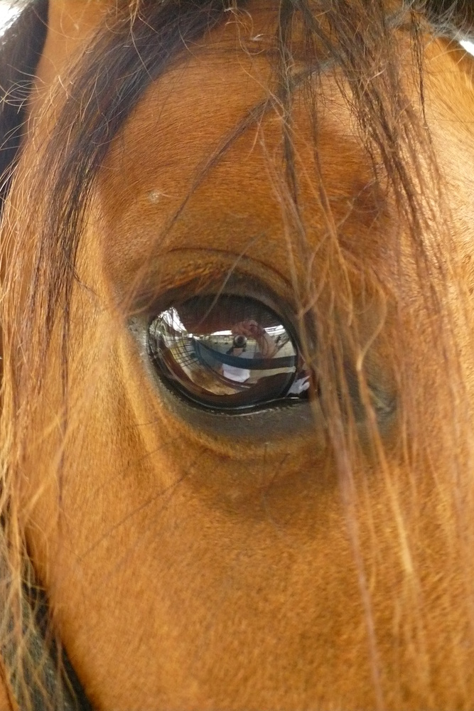 The Eye Has It by Linda Whitworth
