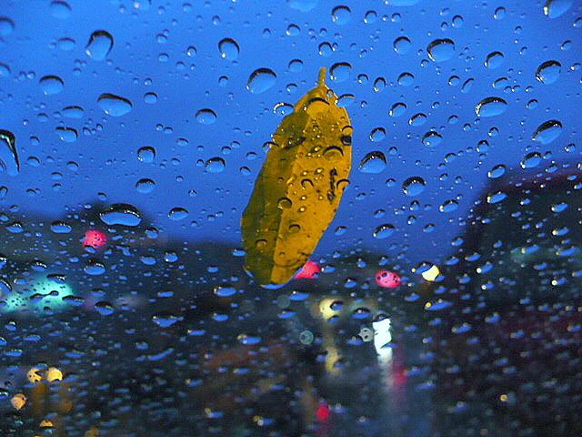 Leaf on Rainy Windshield by Linda Whitworth