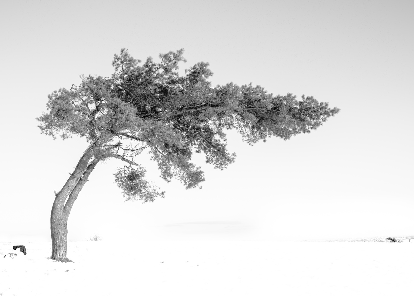 Beauty in isolation by andrew audley