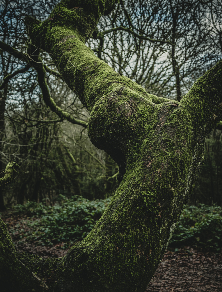 Moss by andrew audley