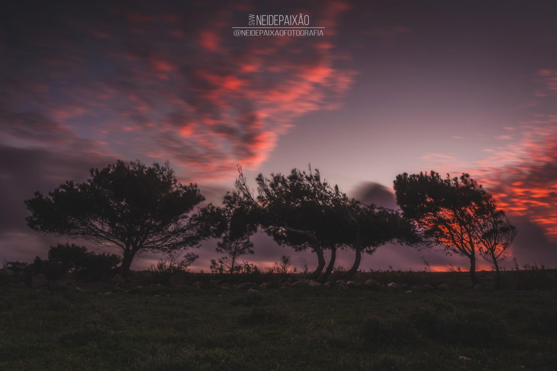 Three Tree-Sisters by Neide Paixão