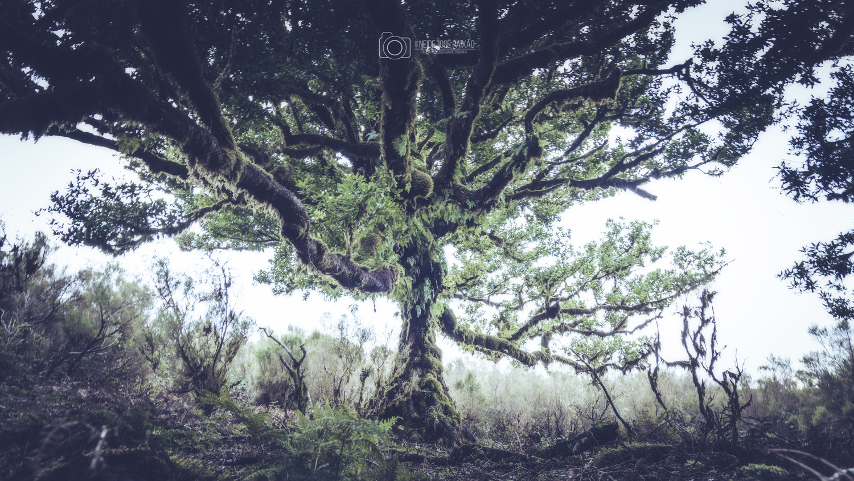 The haunted tree by Neide Paixão