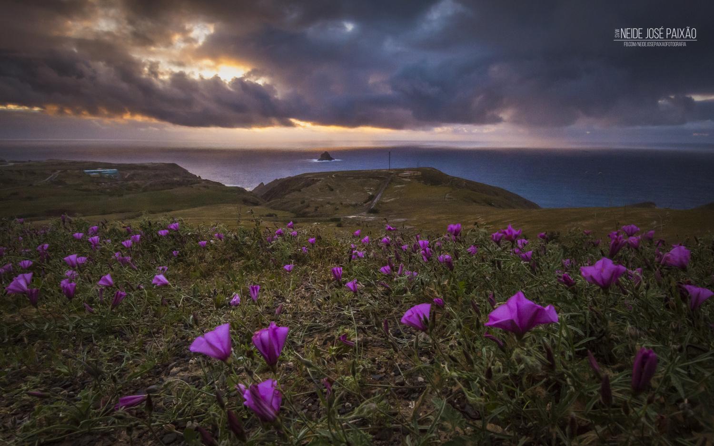 Purple Flowers by Neide Paixão