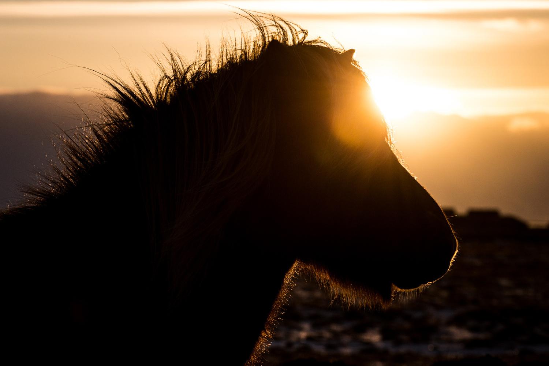 Horse Silhouette by Jeroen Van Nieuwenhove