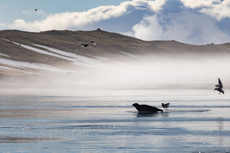 Sealhouette by Jeroen Van Nieuwenhove