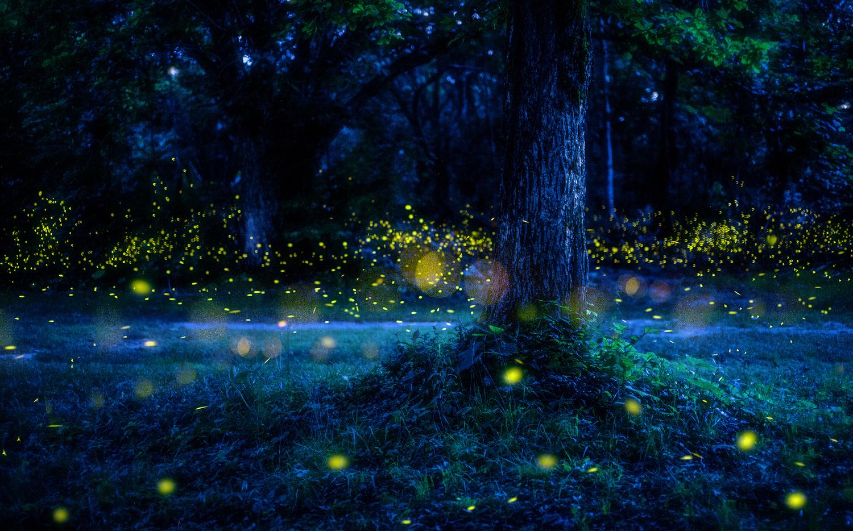 Summer trees  by kazuaki koseki