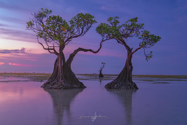 The Samba's of Sumba Trees by Jimmy Kohar