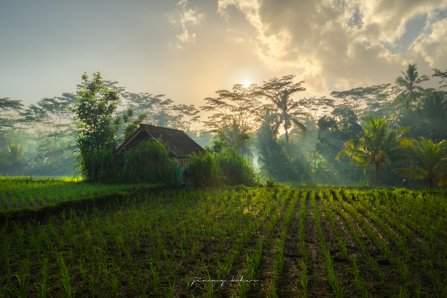 Morning Rays at Susut Rice Terrace by Jimmy Kohar