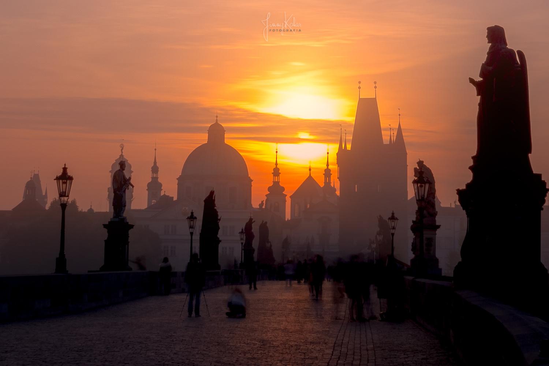 Medieval Morning Glory by Jimmy Kohar
