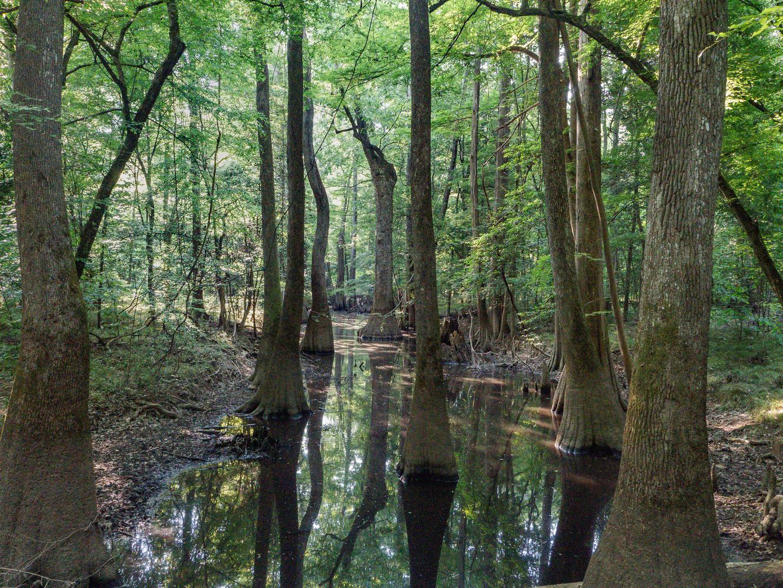 Spring in the floodplain by Belton Zeigler