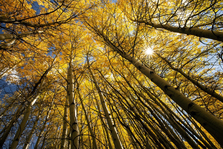 Golden Burst by Andy McIntosh