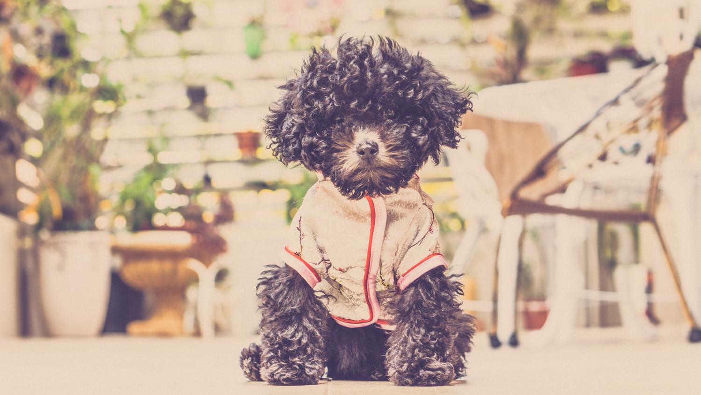 puppy by RAFFI MAKSIAN