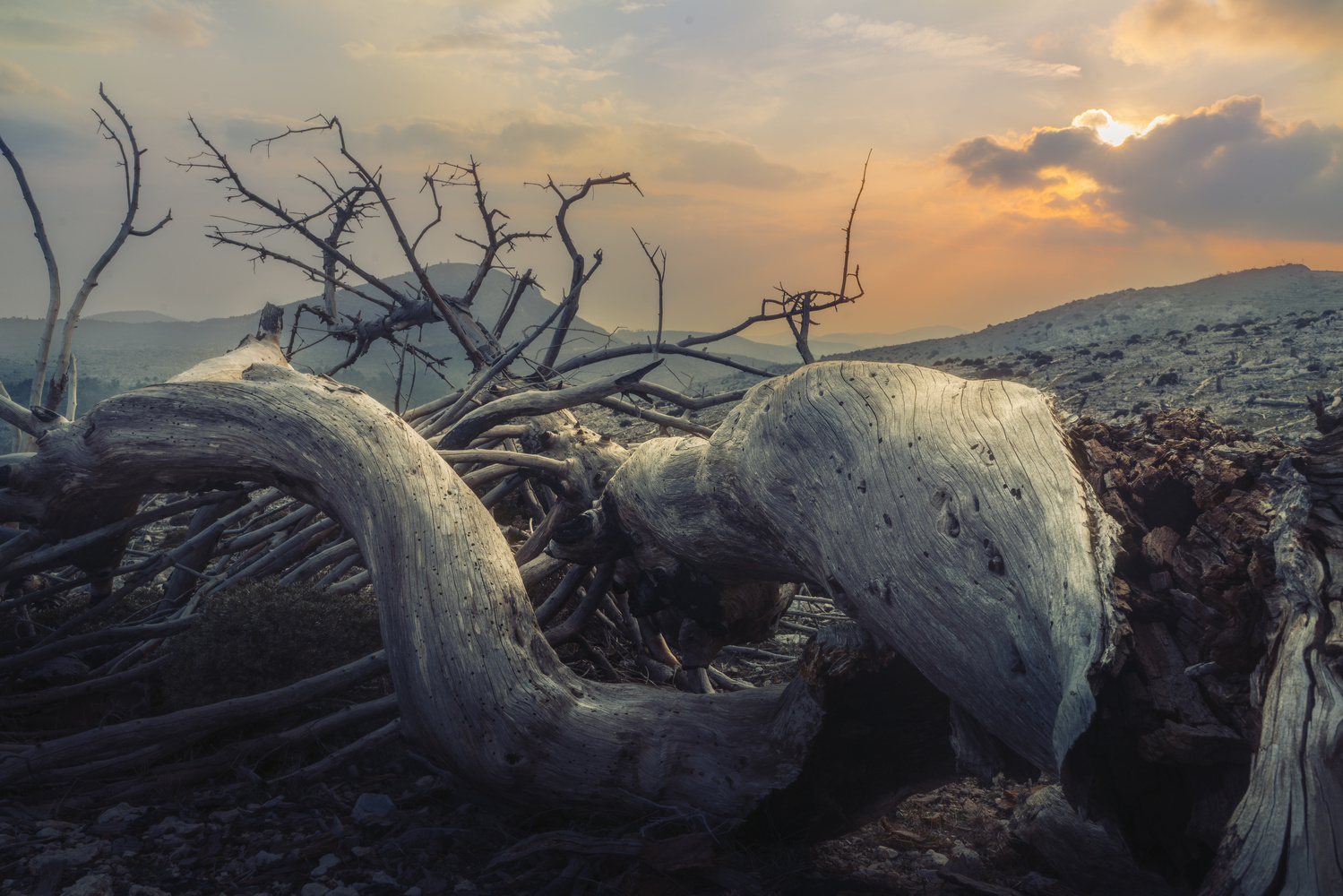 """dead tree """"the serpent"""" by stathis floros"""