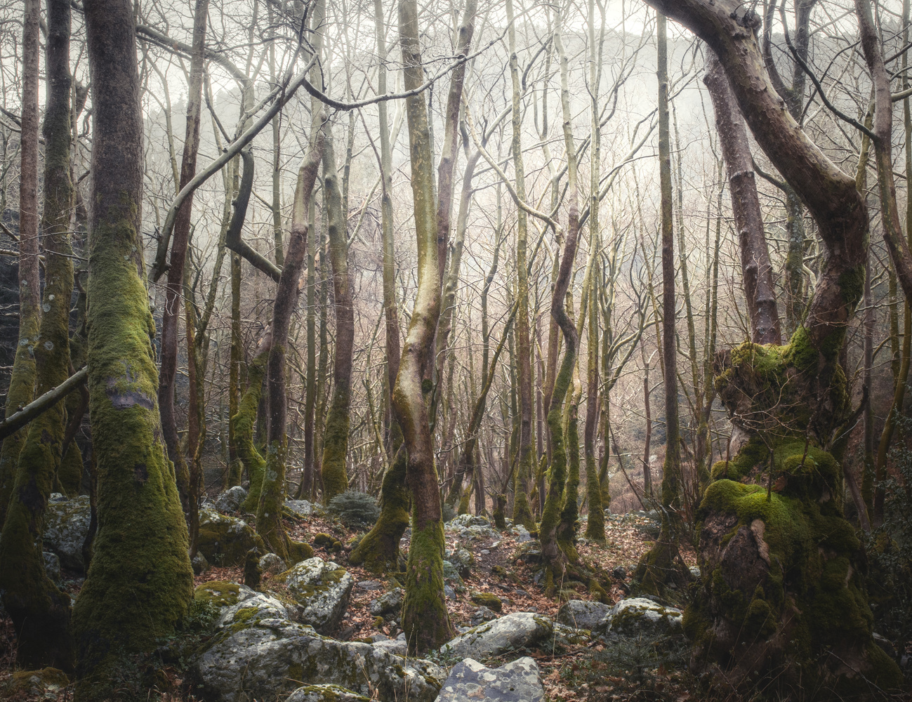 naked forest by stathis floros