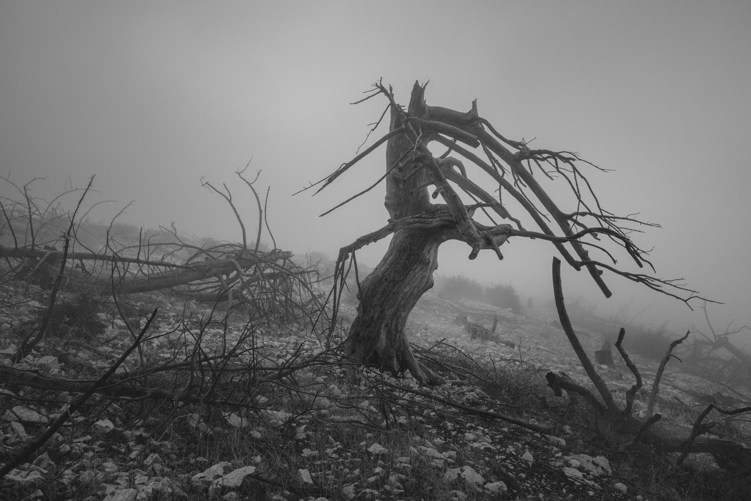 skeleton tree by stathis floros