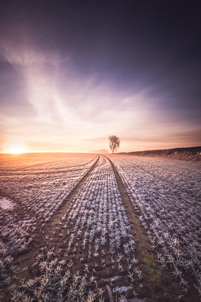 Lines shall lead the way. by Lee Higgs
