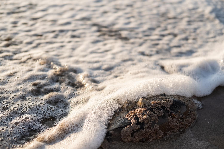 An Ocean Blanket by Lee Higgs