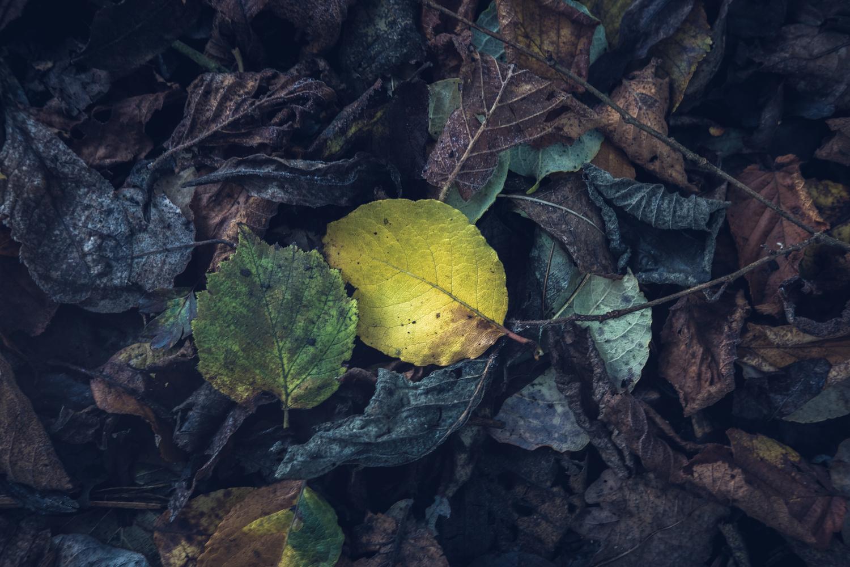 The fallen flower by Lee Higgs