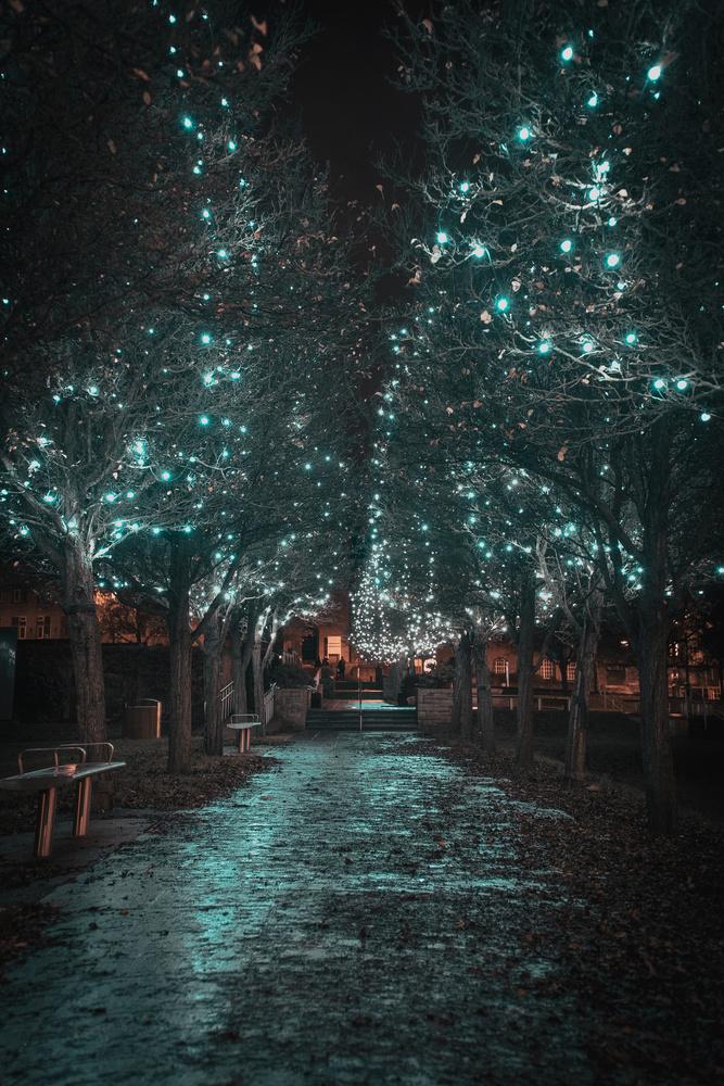 Walking towards the holiday season by Lee Higgs