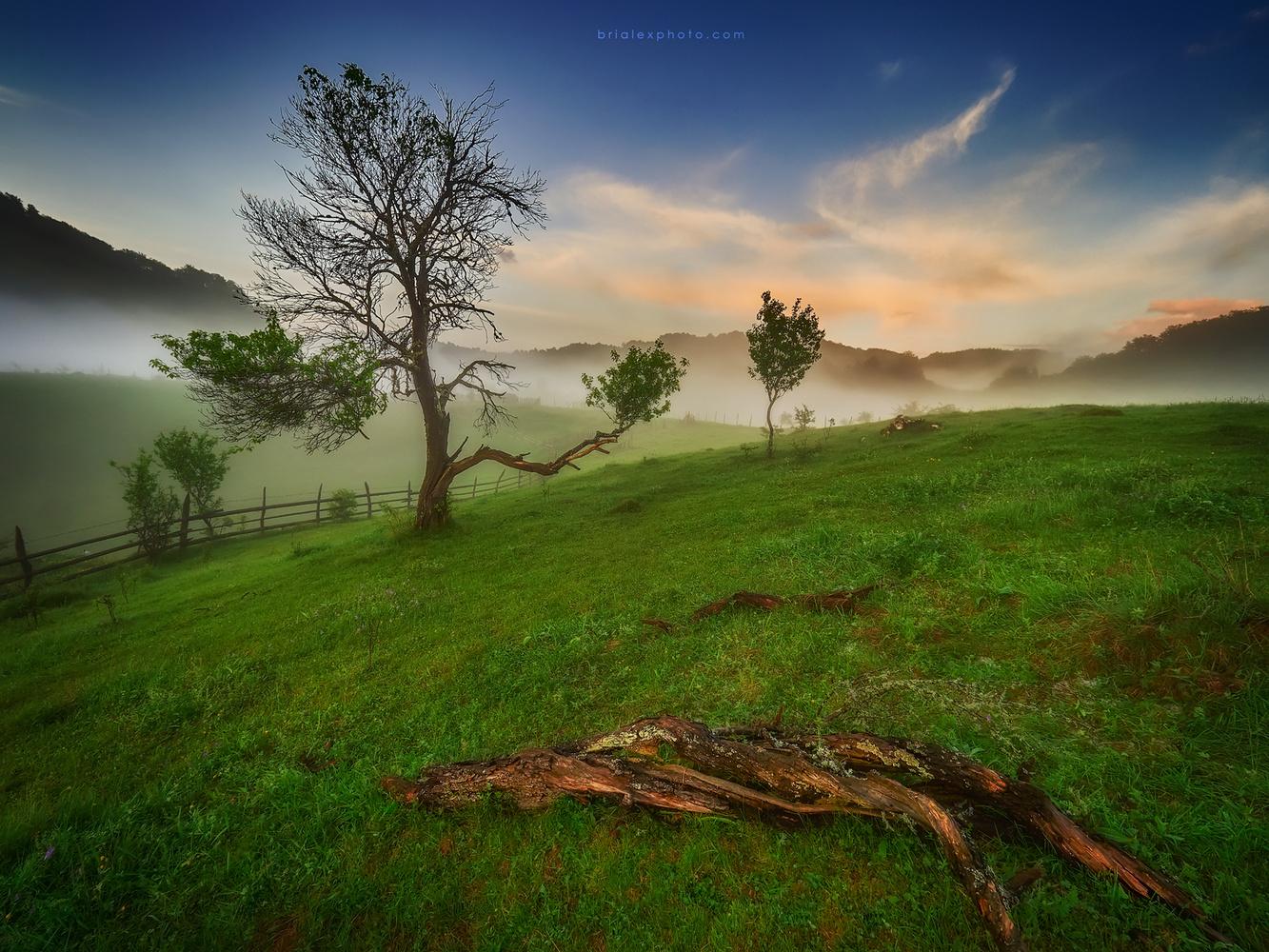 As in Heaven so on Earth by Brighilă Alex
