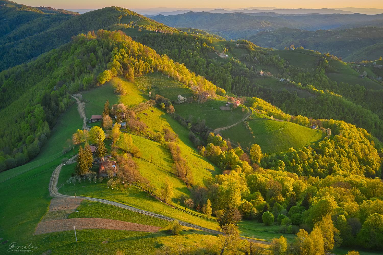 Golden morning by Brighilă Alex