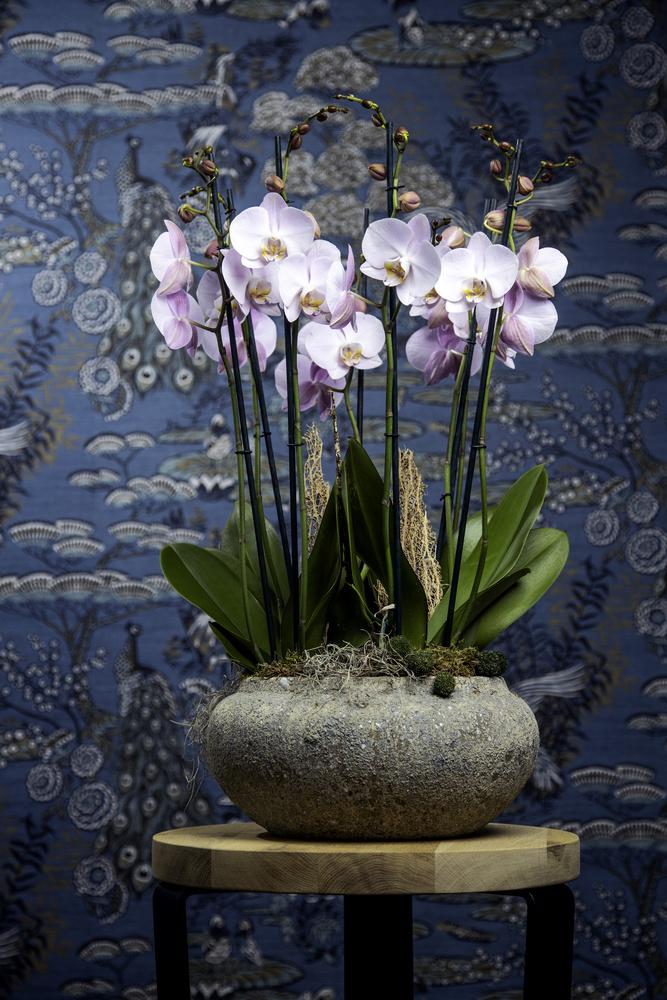 Ter Laak Orchids by Glenn Mostert