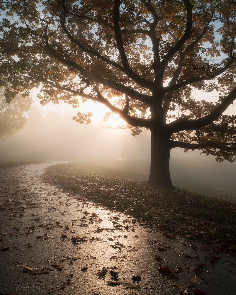 «Misty october morning» by Klaus Axelsen