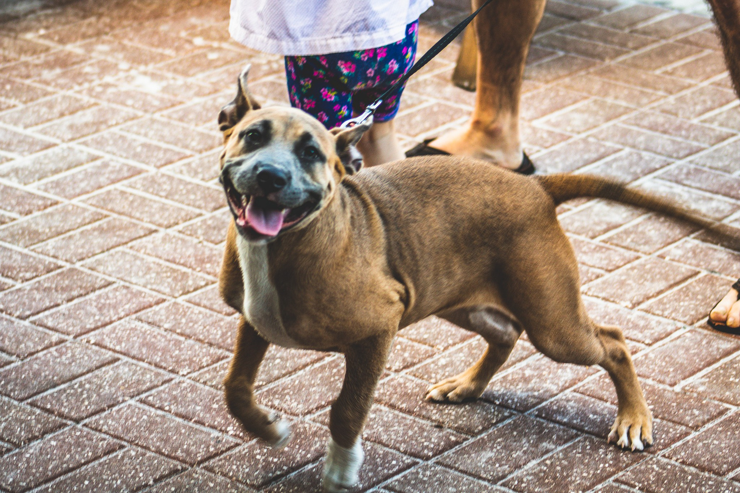 Smiles the pup by Kenneth Hofmann