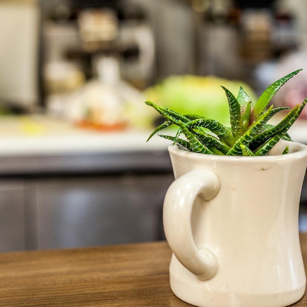 Cup O' Green by Kenneth Hofmann