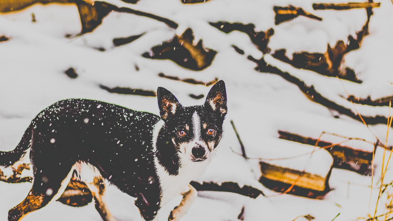 Carlos in Snow by Kenneth Hofmann