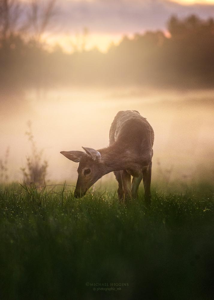 Twilight graze by Michael Higgins