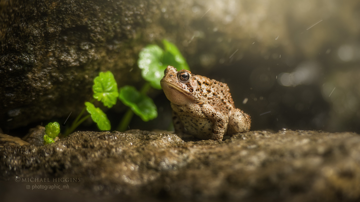 Toad, puffed up. by Michael Higgins