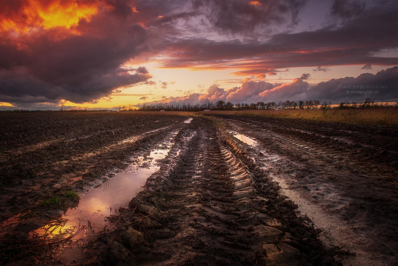 Mud Tracks by Michael Higgins