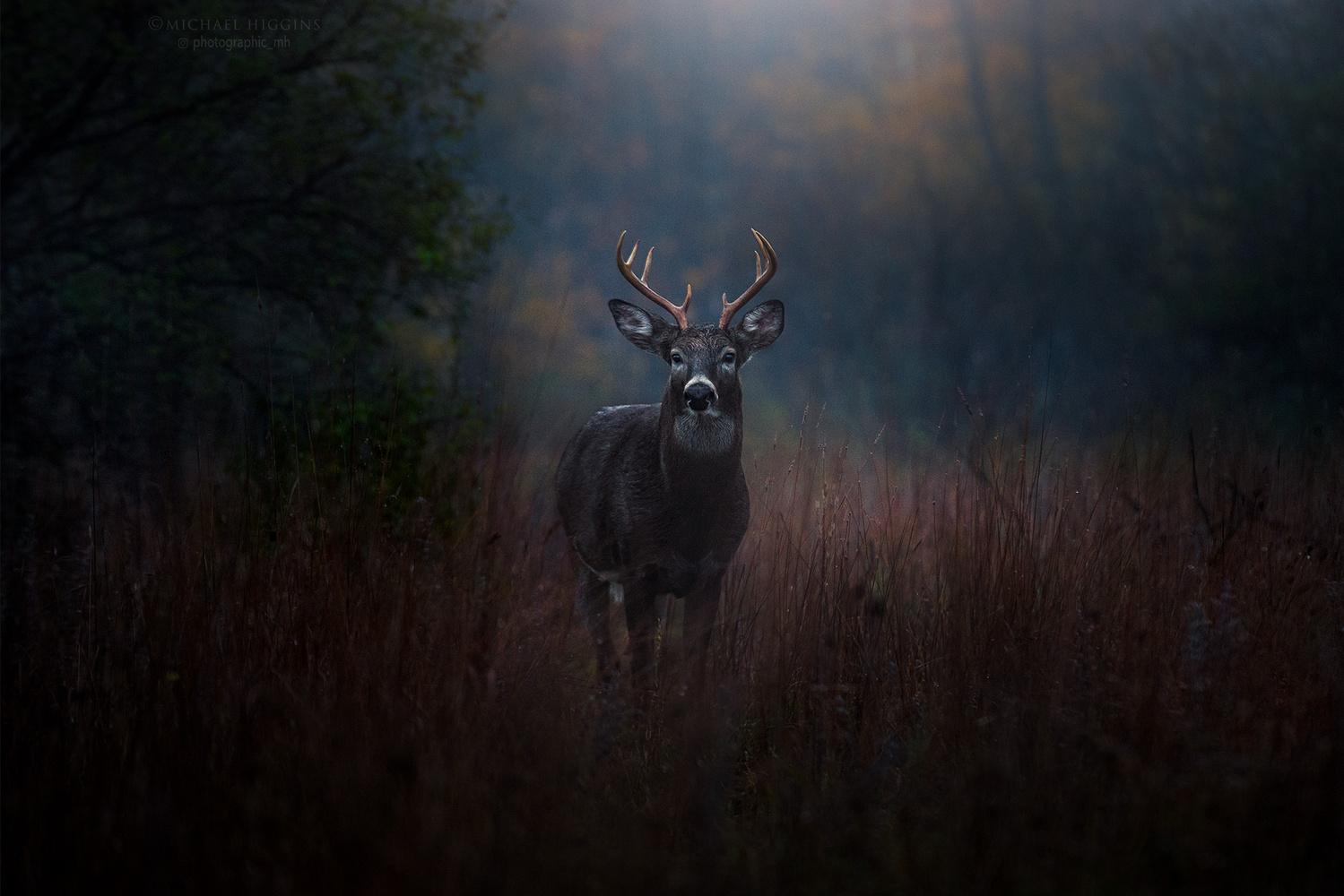 Morning, buck. by Michael Higgins