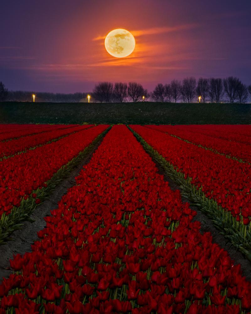 Supermoon by Ellen van den Doel