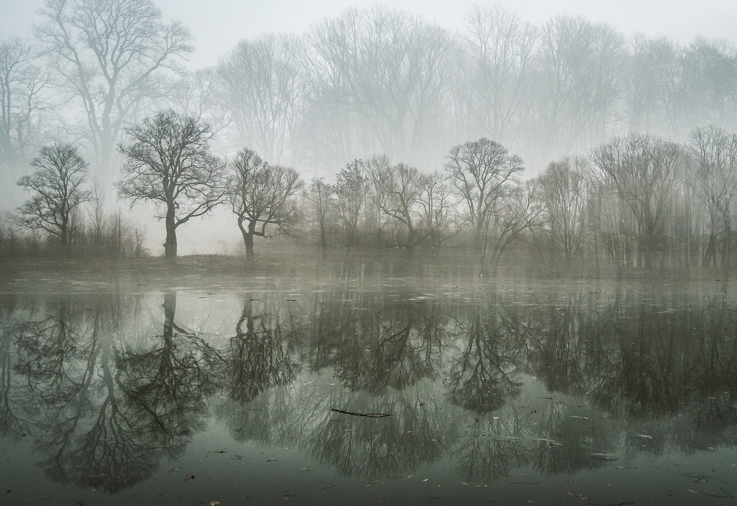 December Morning by Malgorzata WALKOWSKA