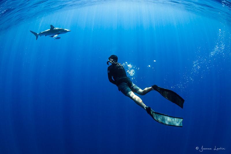 Apex Predators | Baja, Mexico by Joanna Lentini