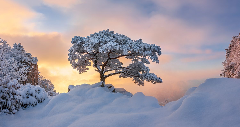 Cold loner by jaeyoun Ryu